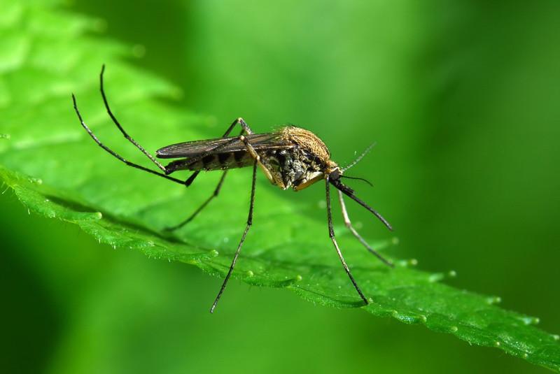 Как вы думаете, почему комары кусают вас больше других?