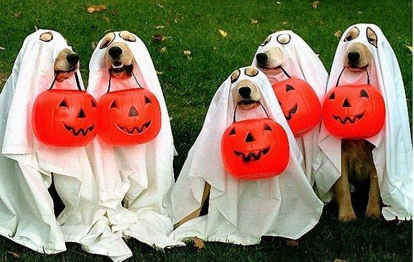 Эти милые собачки поднимут вам настроение, своими милыми нарядами!