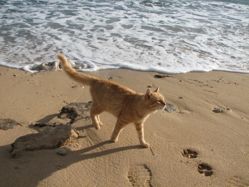Кошачий пляж в Италии покорил тысячи туристов