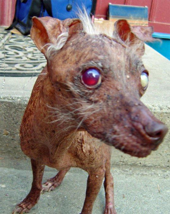 Эти собачки могут вас напугать!