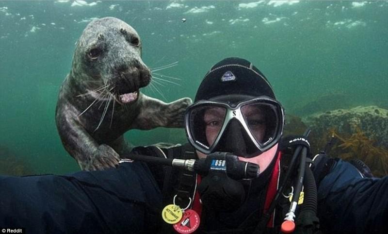 Веселые селфи с животными, которые очень любят фотографироваться
