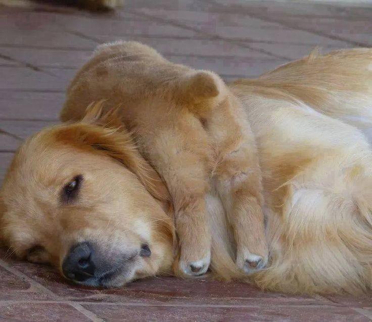 Эти животные рассказывают нам, каково это - быть матерью