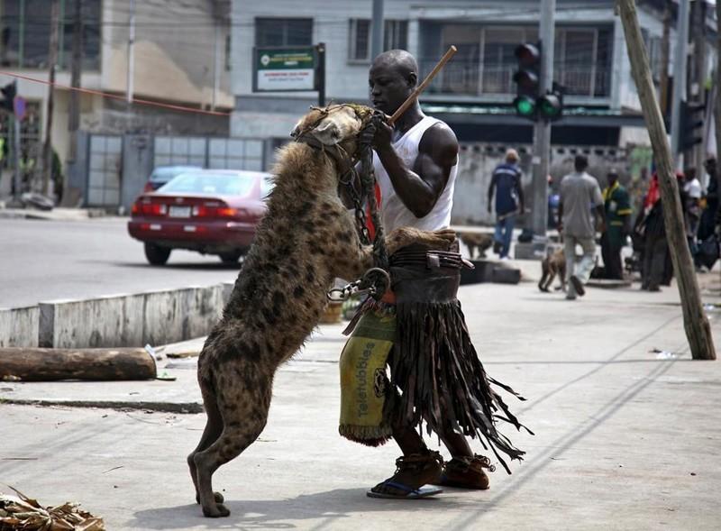 Обычные домашние животные им просто надоели!