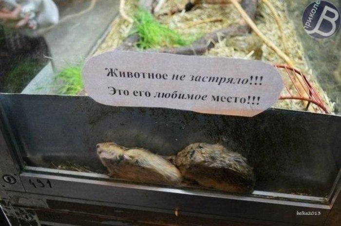 Добро пожаловать в зоопарк!