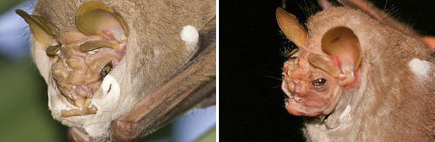 15 реальных животных, про которых можно снимать фильмы ужасов