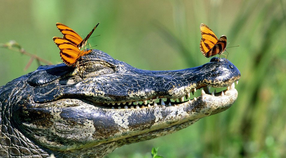 Самые счастливые животные в мире! А ваш питомец тоже так выглядит?