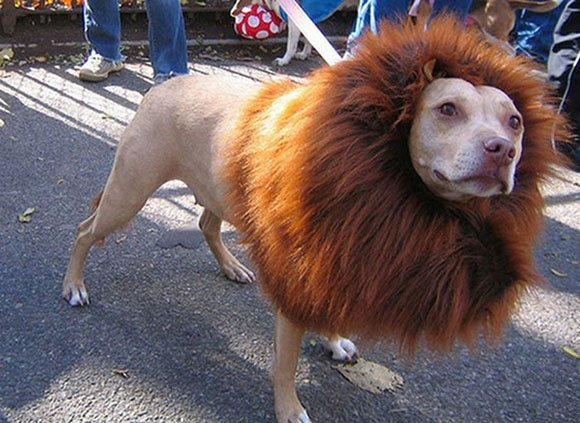 Прически животных, которые не оставят вас равнодушными!