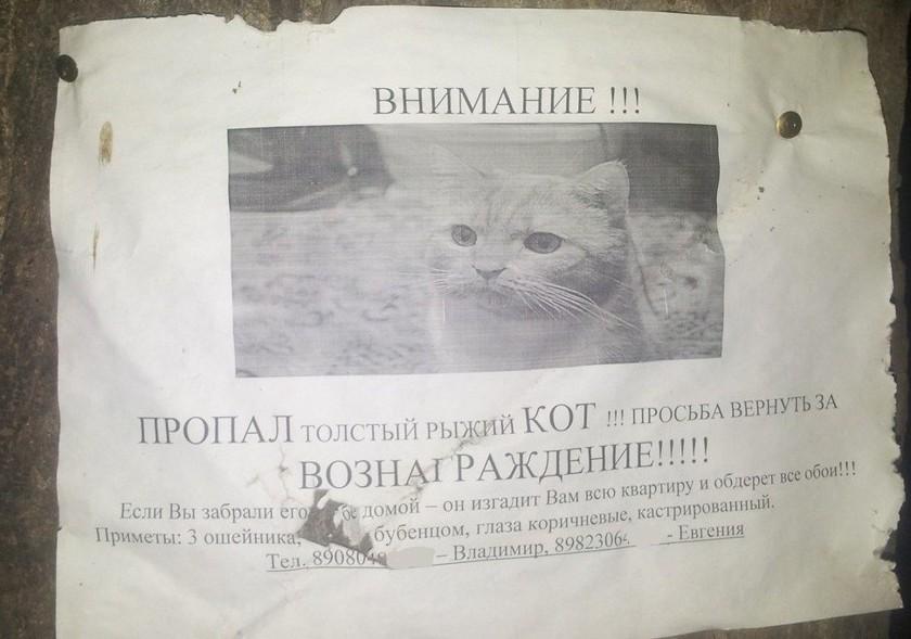 Объявления о пропаже животных от очень остроумных хозяев
