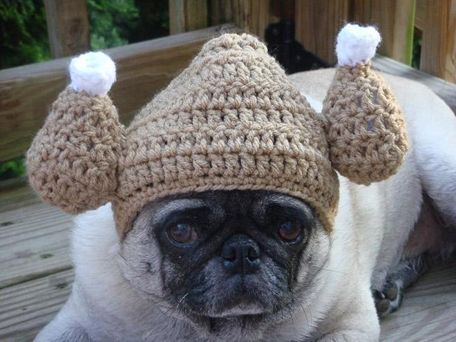 Печальный мопс и его милые вязаные шапочки