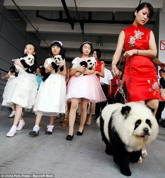 Новая Китайская мода!