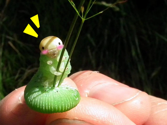 Картинки приколы с гусеницами, день рождения куму