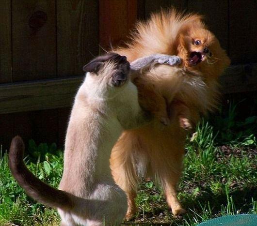 По-моему эти зверята не очень рады...)))
