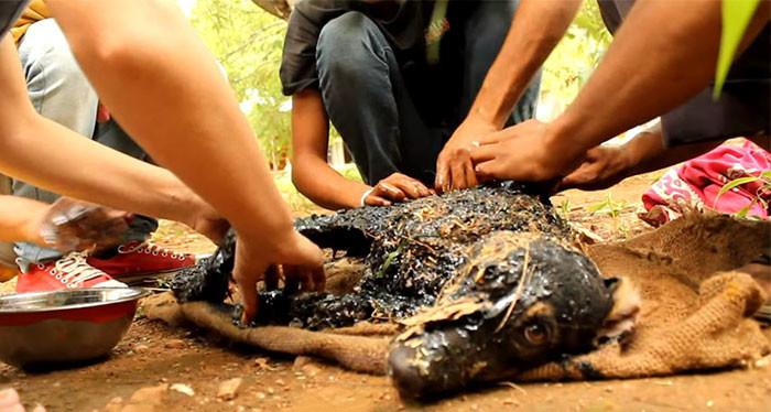 Щенок, упавший в горячий гудрон, был обречен! Но случилось чудо