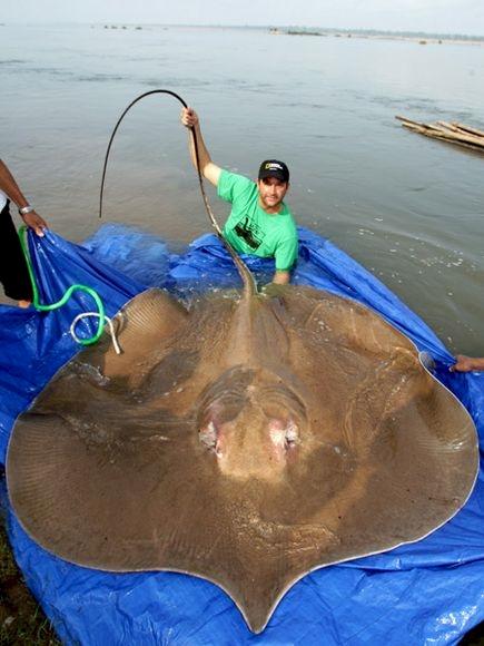 20 неожиданно гигантских животных, с которыми вам вряд ли захочется встретиться