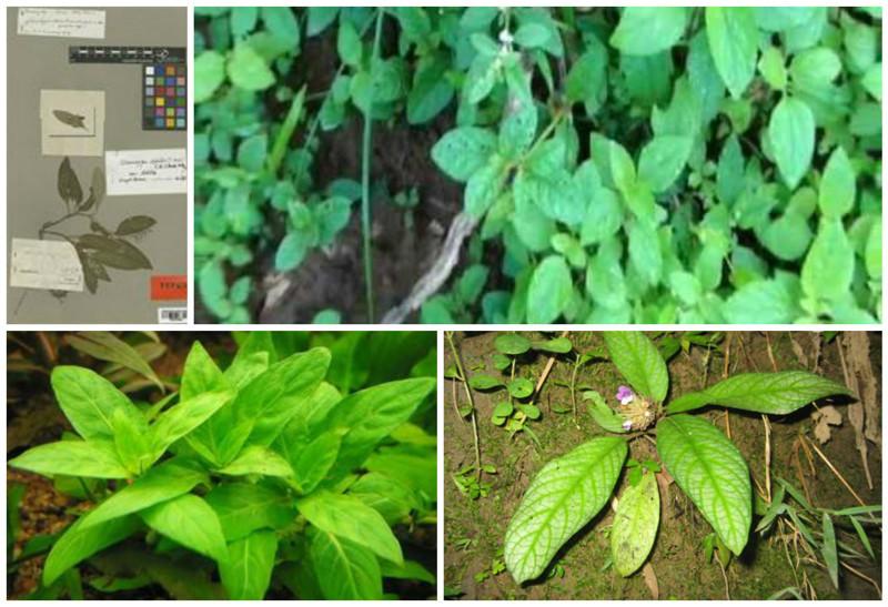 Чтобы профессионально крыть матом нужно всего лишь знать названия растений на латинском