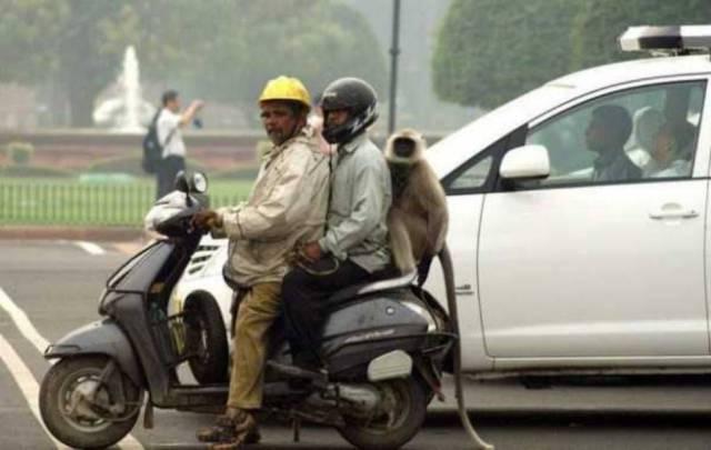 Индия - страна чудес и парадоксов