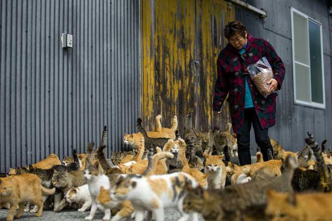 А вы знали об острове кошек в Японии?