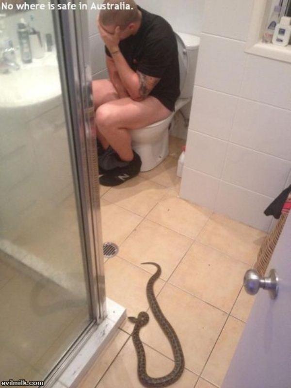 22 фото-доказательства, что Австралия - ад для офидиофобов