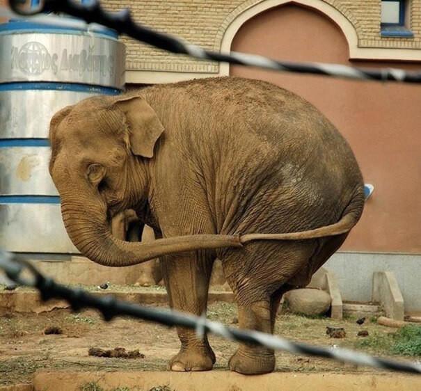 Самые эпичные провалы животных, которые от души вас насмешат