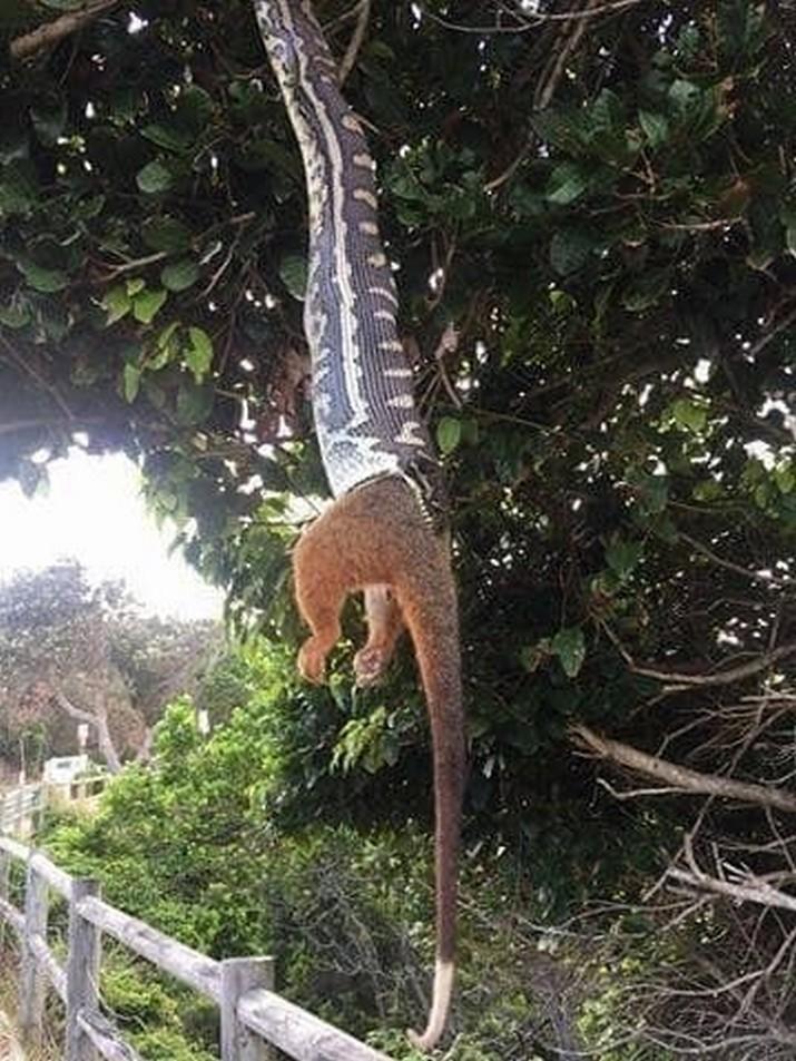 Слабонервным не смотреть: 20 раз, когда австралийские животные зашли слишком далеко