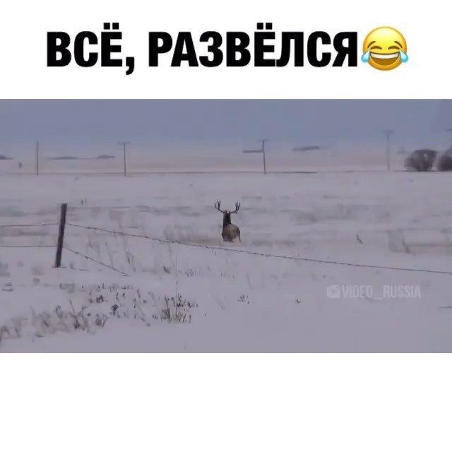 Русские рогоносцы фото 89338 фотография