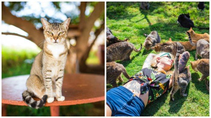 Это просто рай для любителей кошек