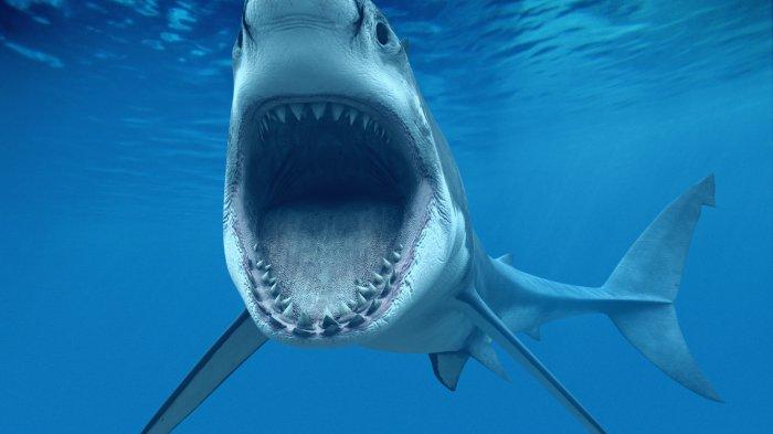 Интересный аттракцион с нападением акулы