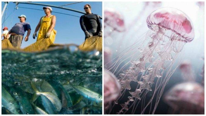 Океанские глубины хранят в себе очень много удивительного, пугающего и неизвестного