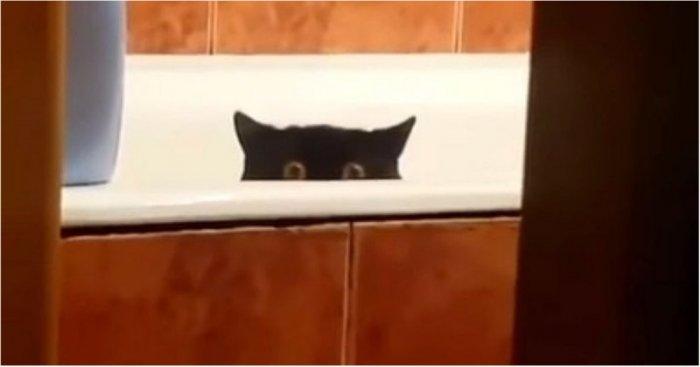 Хитрый котик украл рыбу с кухонного стола и спрятался в ванной