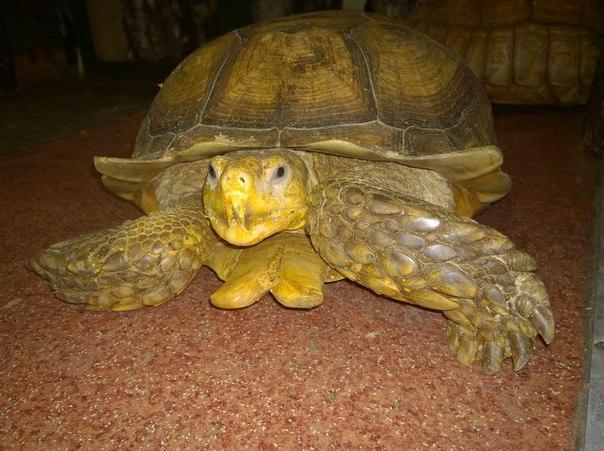 Сбежавших из иркутского зоопарка гигантских черепах задержал местный кот Батон