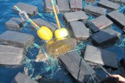 Американские моряки спасли черепаху, застрявшую в 800 килограммах кокаина (видео)