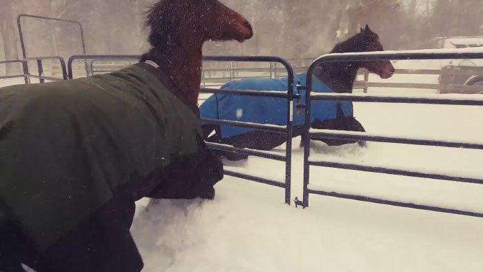 Эти лошадки стали героями YouTube: 19 секунд позитива