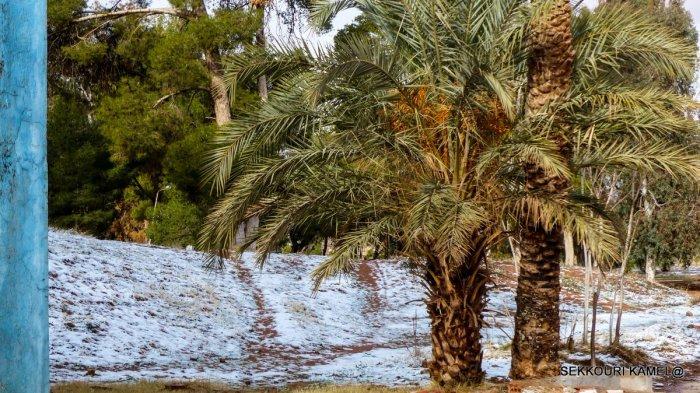 Уникальное природное явление: Сахару засыпало снегом