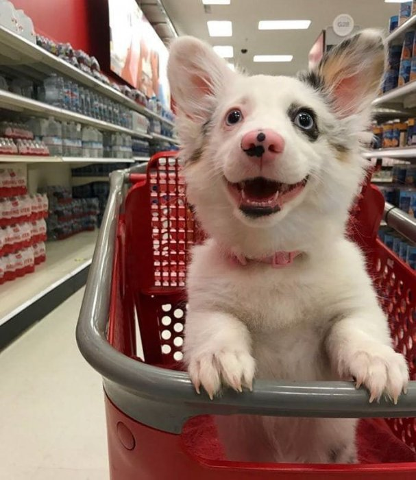 Забавная собака-улыбака влюбила в себя даже ярых кошатников