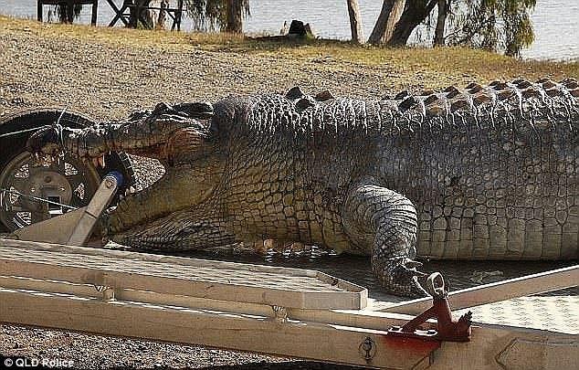 Австралийский фермер застрелил 100-летнего крокодила за убийство телят