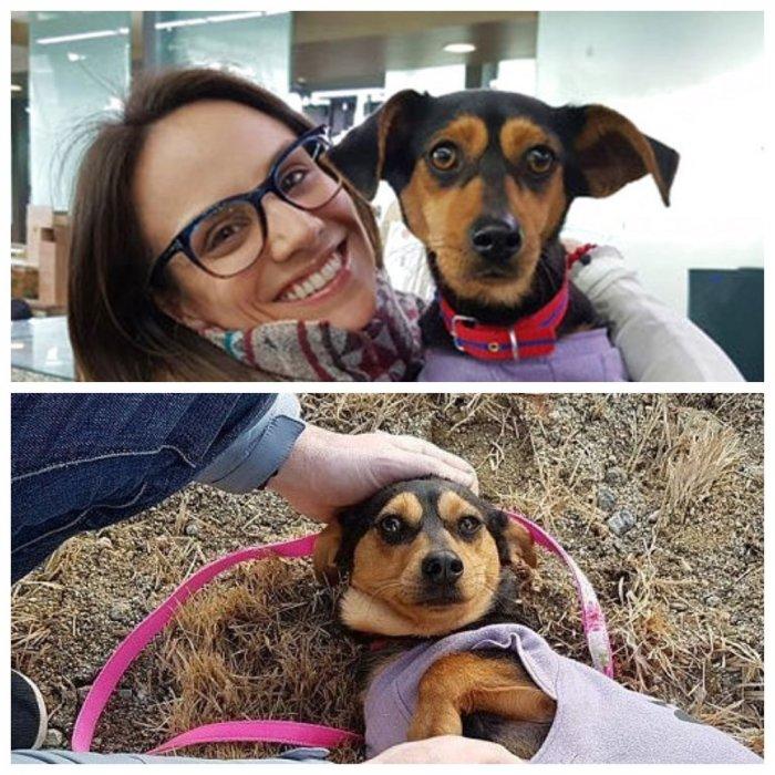 Олимпийская чемпионка спасла корейскую собаку, которую выращивали на убой