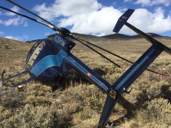 В США лось сбил вертолет рогами