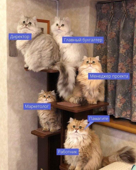 Баян или нет?.. Новая подборка смешных ситуаций с просторов интернета