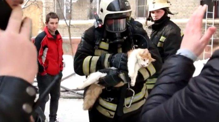 Кот, умерший на пожаре, воскрес на руках у спасателя