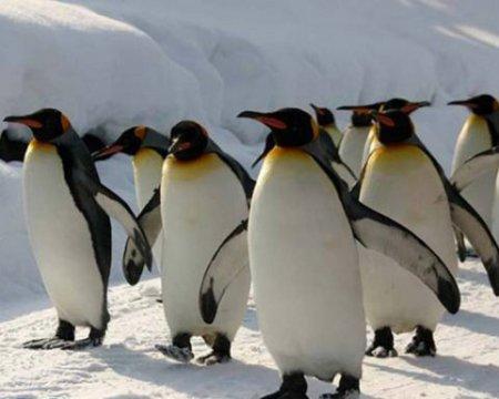 Пингвины нечаянно сняли забавное видео на камеру ученых
