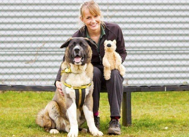 90-килограммовый щенок ищет дом