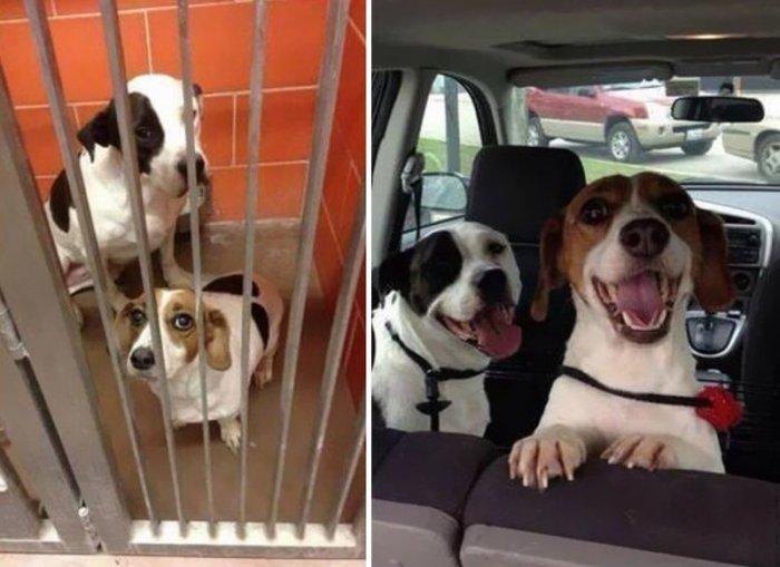 Поразительные фото бездомных собак до и после обретения семьи