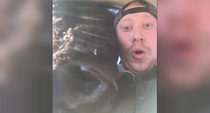 Огромный бизон вломился в машину туристов (видео)