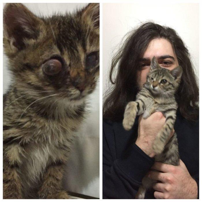 Мужчина забрал с улицы слепого котенка и обрел друга
