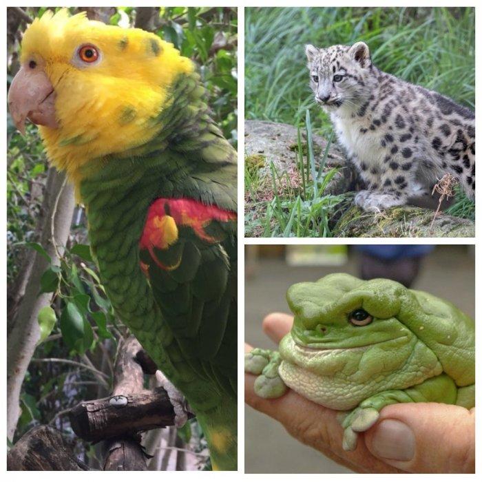 """Зоопарки написали шутливые отзывы о животных и их """"технических характеристиках"""""""