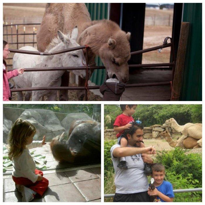 """Прямо как на телеканале """"Дискавери"""": курьезные случаи в зоопарках"""