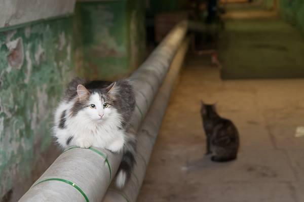 Минстрой запретил замуровывать котов в подвалах