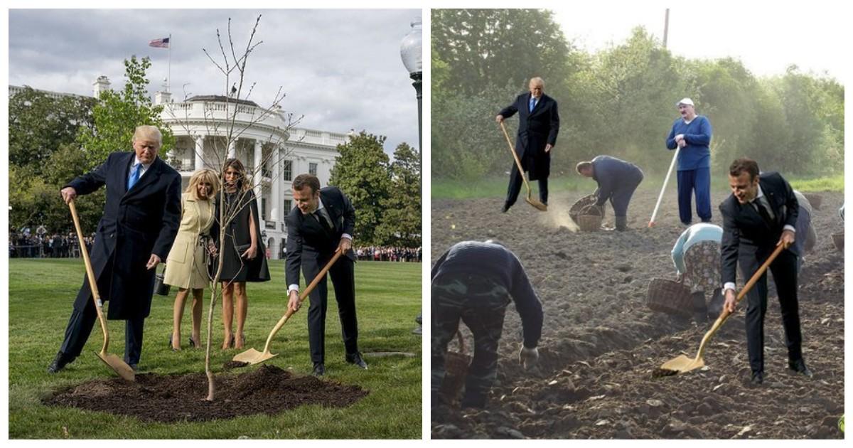 Пока Трамп с Макроном сажали деревья, интернет придумывал свою версию происходящего