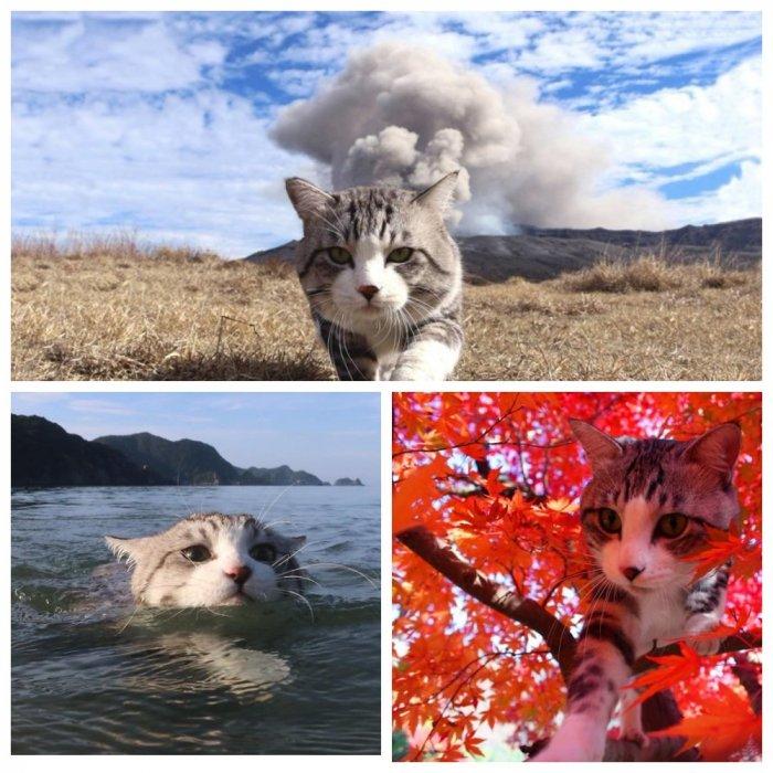 Фотогеничный кот-путешественник зазвездился в Instagram