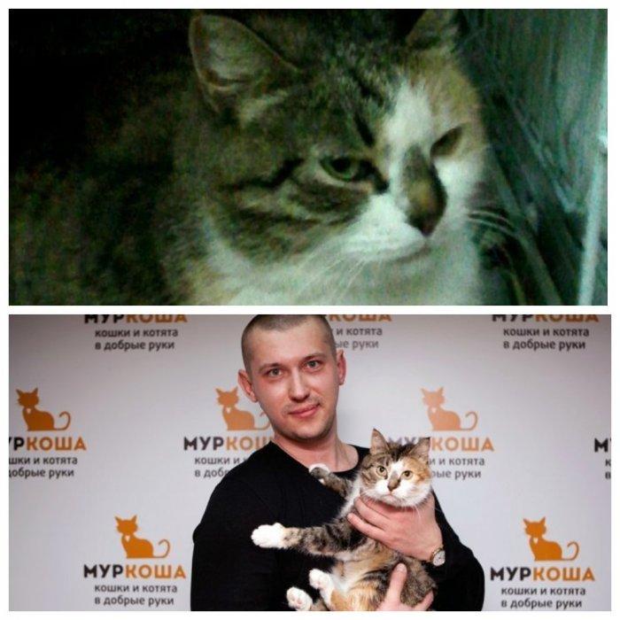 Как в кино: чудесная история спасения бездомной кошки
